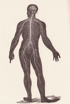 centraal zenuwstelsel met vertakkingen
